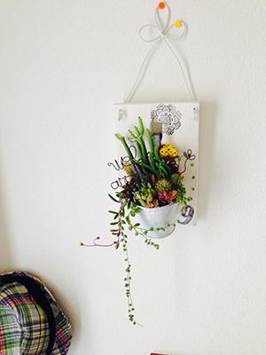 オシャレな空間をつくる多肉植物&サボテンの寄せ植えを体験!