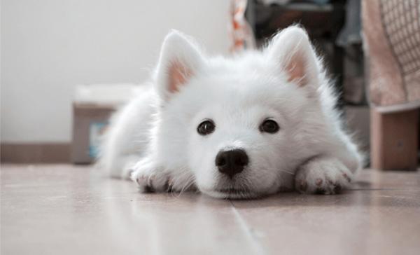新人×犬×マミー