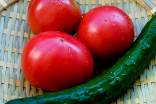 エコっち君でベランダ菜園をはじめよう!夏野菜食べたい。