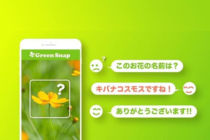 植物SNS「GreenSnap」にて教えてタグ回答数が30,000件を突破!